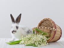 与春天花的兔子 免版税库存照片