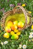 与春天花的复活节彩蛋 库存照片