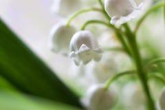 与春天花铃兰的精美背景 春天淡色背景,镇静颜色 插入文本的地方 为 库存照片