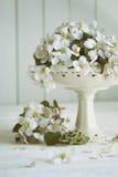 与春天苹果开花的静物画在花瓶 库存照片
