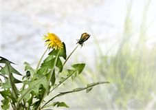 与春天草的构成在蓝天背景 免版税库存图片