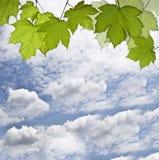 与春天草的构成在蓝天背景 免版税图库摄影