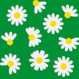与春黄菊的无缝的模式 免版税库存图片