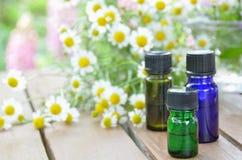 与春黄菊的芳香疗法油 库存照片
