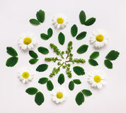 与春黄菊花和叶子的装饰坛场在白色背景 平的位置 图库摄影