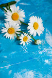与春黄菊花的夏天花卉卡片在蓝色葡萄酒油漆 库存照片