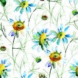 与春黄菊花的无缝的墙纸 图库摄影
