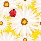 与春黄菊花的春天无缝的背景 eps10开花橙色模式缝制的rac ric缝的镶边修整向量墙纸黄色 免版税图库摄影