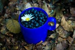 与春黄菊& x28的蓝莓; 或者daisy& x29;在叶子的一个蓝色杯子 库存图片