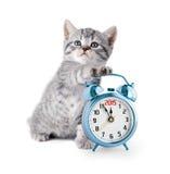 与显示2015年的闹钟的小猫 免版税库存照片
