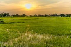 与晚上光的米领域 图库摄影