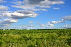 与晚向日葵的一个绿色领域的一个农村风景在多云蓝色sk下的 图库摄影