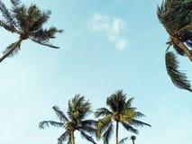 与晴朗的天空的可可椰子树 图库摄影