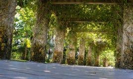 与曲折的绿色藤的异想天开的石格子 图库摄影