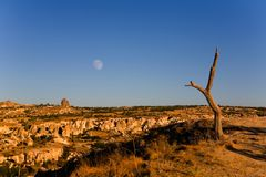 与月亮和一棵老树的晚上风景在卡帕多细亚 库存照片
