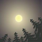 与月亮和杉树的夜风景 图库摄影