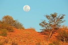 与月亮的沙漠沙丘 图库摄影