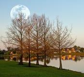 与月亮的风景 免版税库存图片