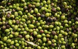 与有些叶子的绿橄榄 免版税库存图片
