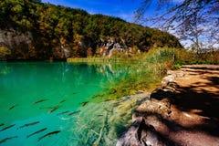 与有些树和鱼-普利特维采湖群国家公园- Plitvice Jezara,克罗地亚的水晶水 库存图片