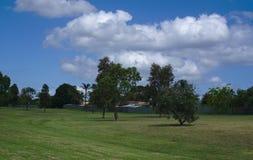 与有些树的绿草 免版税图库摄影
