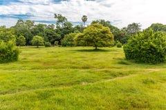 与有些树的美丽的绿草在公园 免版税库存图片