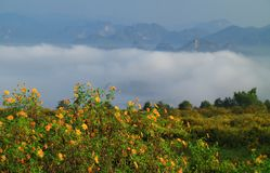 与有雾的墨西哥向日葵, Mae Moh, Lampang,泰国 库存图片