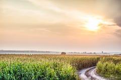 与有雾的天际的农村风景在背后照明阳光下 图库摄影