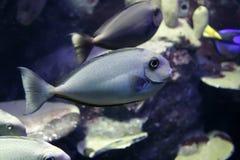 与朋友的鱼 免版税库存图片