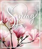 与木兰开花早午餐的春天文本与模糊的作用的 背景蒲公英充分的草甸春天黄色 向量 免版税库存图片