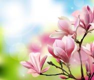 与木兰开花早午餐的春天背景与模糊的作用的 向量 库存图片