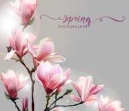 与木兰开花早午餐的春天背景  向量 皇族释放例证