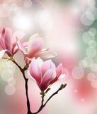 与木兰开花早午餐的春天背景  向量 库存图片