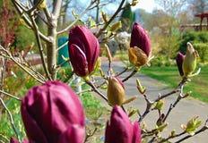 与木兰树的明亮的颜色装饰背景纹理的宏观照片  库存图片