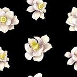 与木兰的无缝的样式在黑背景开花 也corel凹道例证向量 皇族释放例证