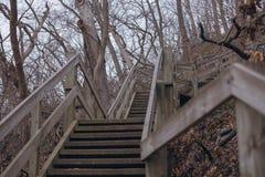 与木台阶的场面在秋天森林里 免版税库存图片