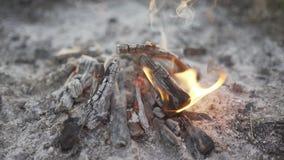 与木头的烧伤火在海滩阵营 股票录像