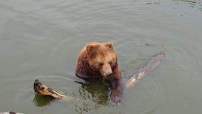 与木头的熊 免版税库存照片