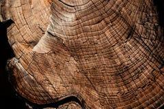 与木年轮的布朗自然木纹理背景 库存图片