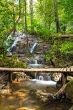 与木桥的热带雨林风景 免版税库存图片