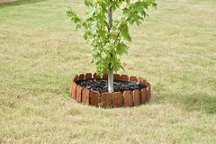 与木篱芭的灌木树 图库摄影