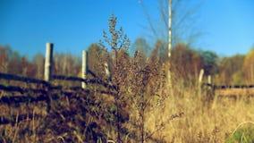 与木篱芭的秋天农村风景 股票视频