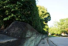 与木篱芭的绿色树篱沿路 免版税库存照片