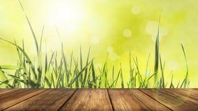 与木表的光芒四射的绿色春天背景在前景 库存图片