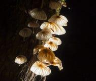 与木头的真菌蘑菇在黑色 库存图片