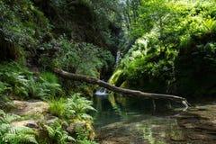 与木头,爱尔兰共和国, Glendalough的瀑布 库存照片