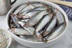 与未加工的欧洲西鲱的盘 免版税图库摄影