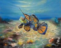与杂草的Mandarinfish 图库摄影