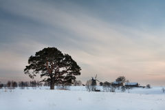 与杉木和磨房的冬天农村风景 库存图片