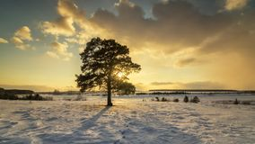 与杉木和积雪的领域在日落,俄罗斯,乌拉尔, 3月的冬天风景 免版税库存照片